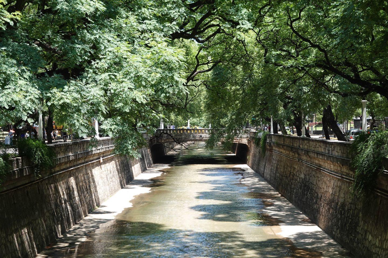 Trees and river of La Cañada