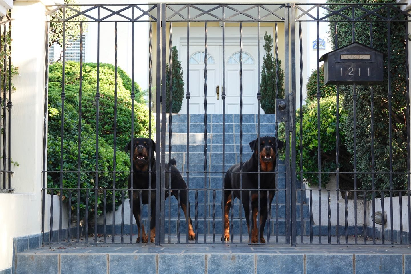 Perros guardianes de una mansion