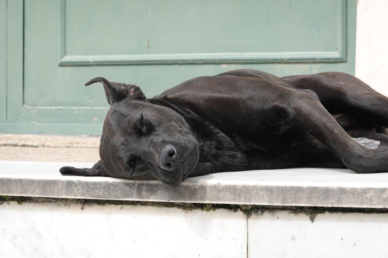 happy stray dog in the Hotel Eden, La Falda.