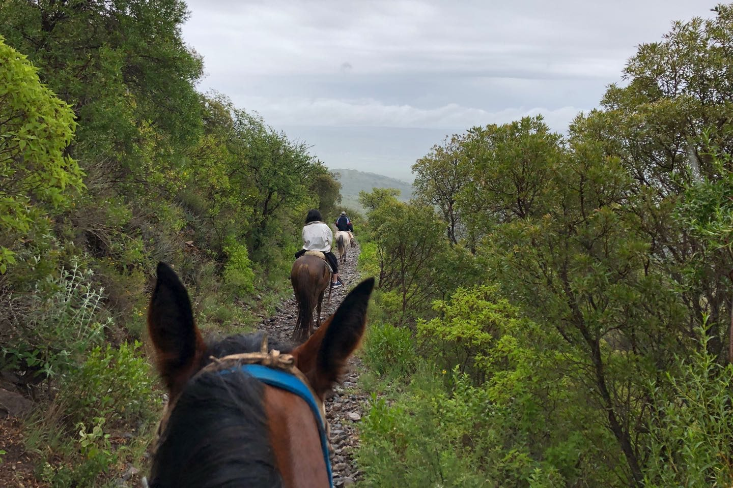 Horseback Riding to the Cerro Las Gemelas.