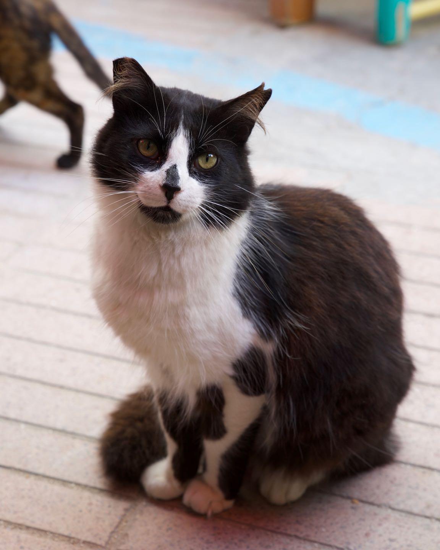 Cat of Essaouira