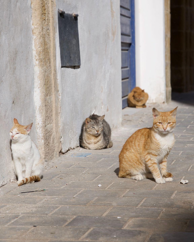 Essaouira, la ciudad de los gatos.